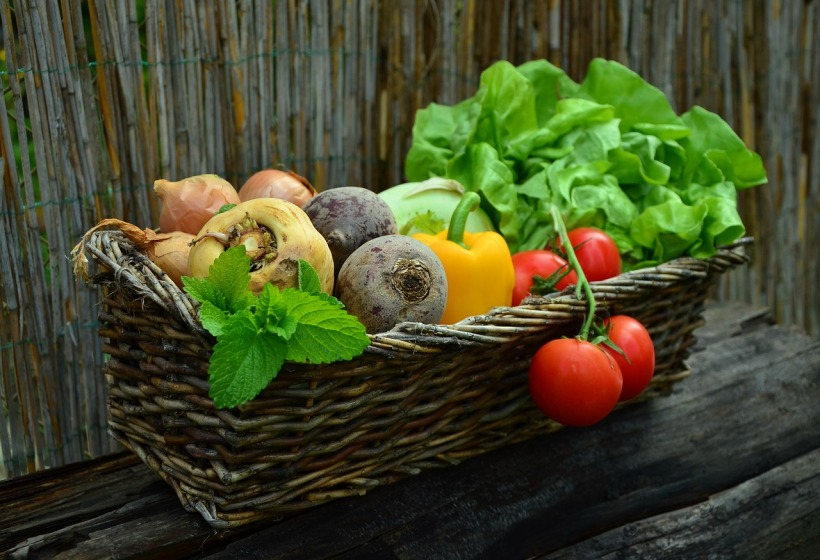plant-based diet for the elderly