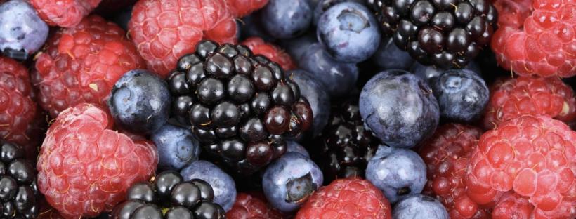 healthy brain nutrition